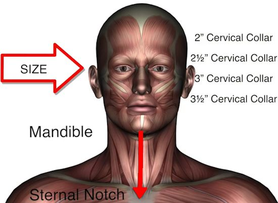 measuring for neck collar