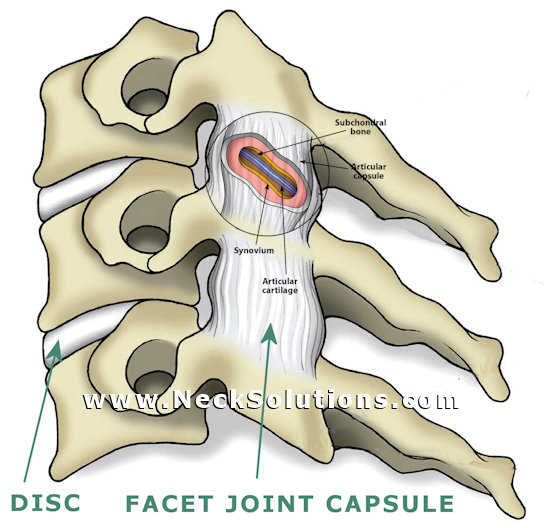 facet joint capsular ligaments of the cervical spine