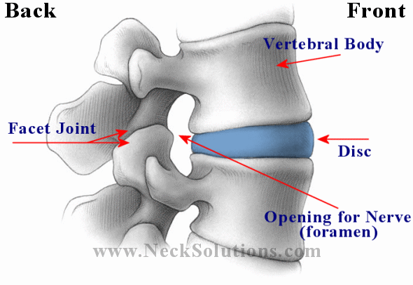Lumbar Spine And Back Pain