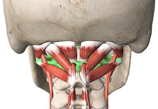 suboccipital cervical spine