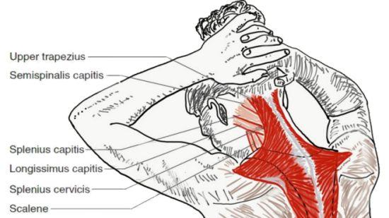 neck extensor exercises