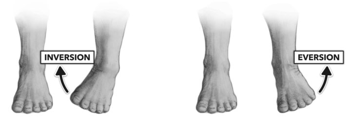 ankle supports positioning